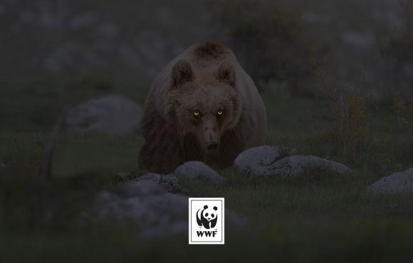 WWF Halloween
